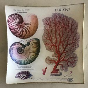 Michel Design Seashell Botanical Jewelry Soap Dish